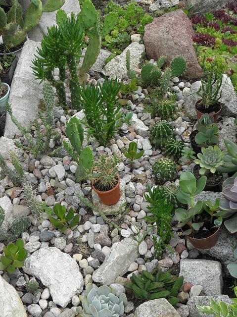 kaktusowisko