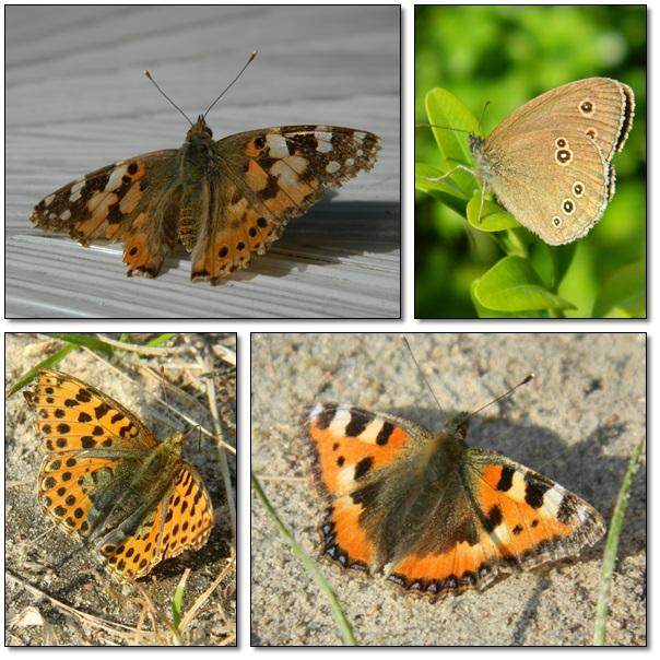 Motylkowa sesja :)