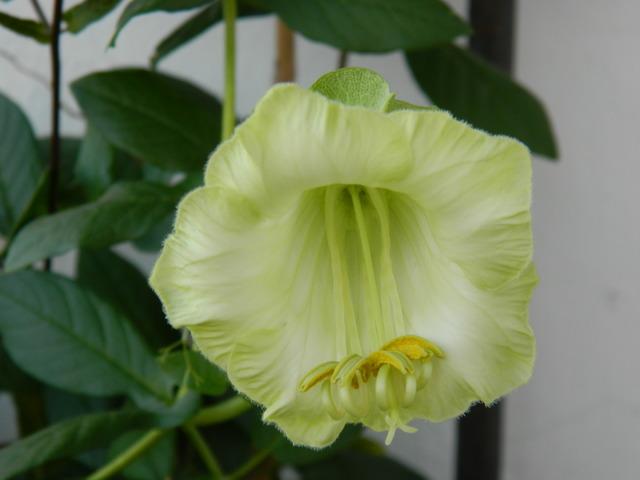 Pierwszy kwiatek...