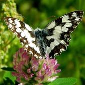 Lato i motyle