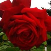 miłego nowego tygodnia życzę...pozdrawiam  wszystkich cieplutko;))