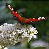 Motyle ją wielbią...