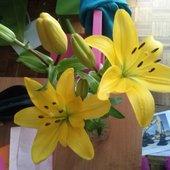 piękne lilije