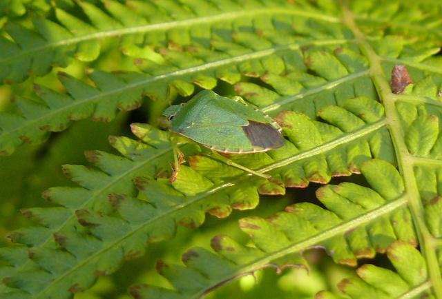 Zielony - barwa ochronna