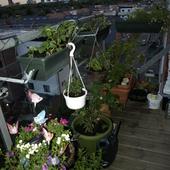 Balkonowy Ogród W M