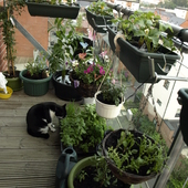 Balkonowy Ogródek 2