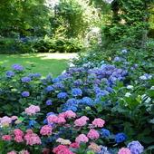 HORTENSJE-Wrocławski Ogród Botaniczny