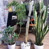 Kaktus przesadzony, teraz jest wśród swoich. :)