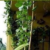 Rośliny na moim balkonie