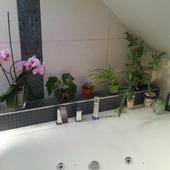 w łazience też musi być zielono part I. :)