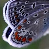 Z polowania na motyla...