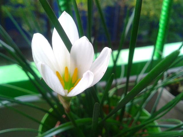 Jeszcze kwitnie