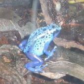 Fioletowo-  niebieskie