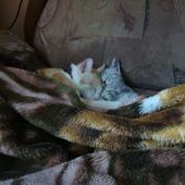 Kot musi się wyspać żeby jutro mieć siłę spać.