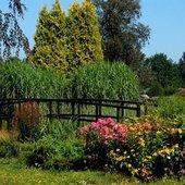 Kwiaty i mostek