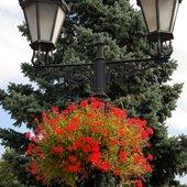 Kwiaty na latarni