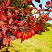 Pozdrawiam jesiennie :)