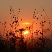 Wstaje słoneczko