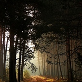 Zapraszam na spacer po lesie.