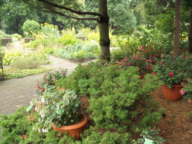 ogród b.wrocław