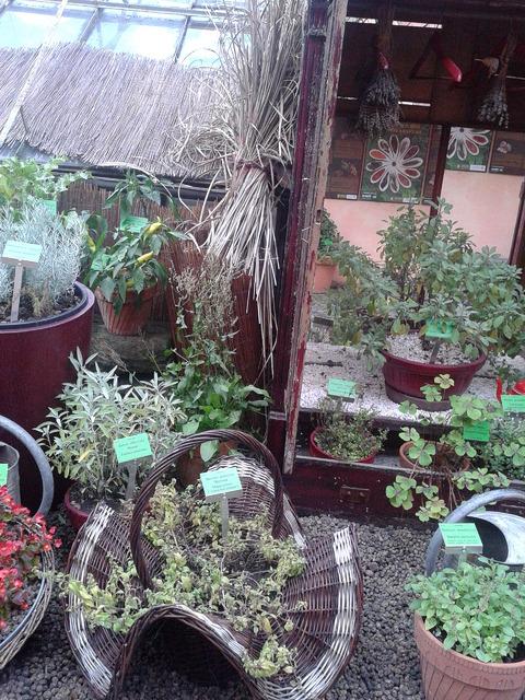 rośliny przyprawowe botaniczny wrocław