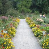 botaniczny ogród kraków