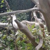 botaniczny ogród wrocław