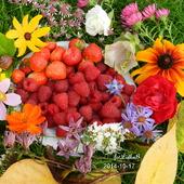 Częstujcie się         ,truskawki i malinki z mojego ogrodu