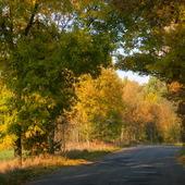 Kolory jesieni :)