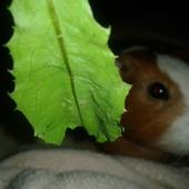 pod liściem