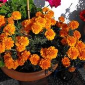 Pomarańczowa energia