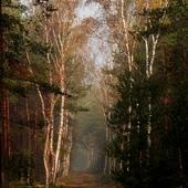 Pożegnanie z lasem