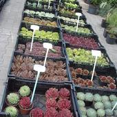 targi wnętrz i ogrodów gliwice
