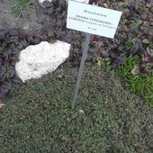 w ogrodzie botanicznym