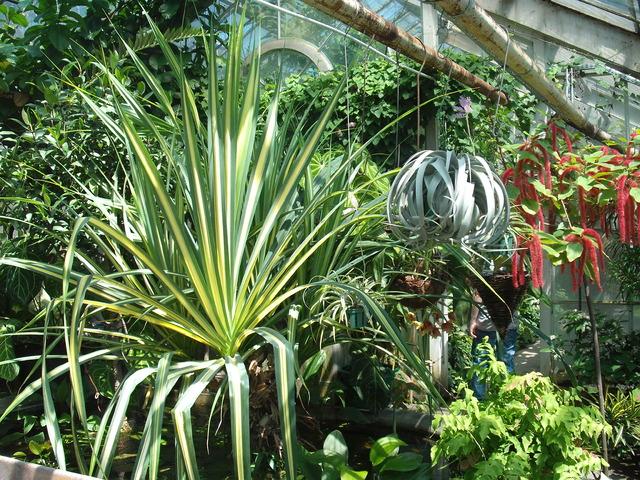 'w szklarni' ogród b. kraków