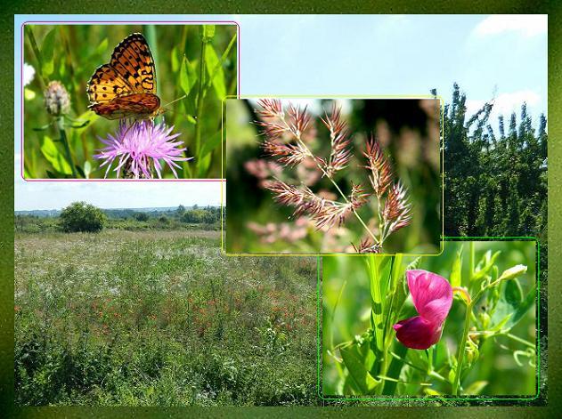Na polach i łąkach