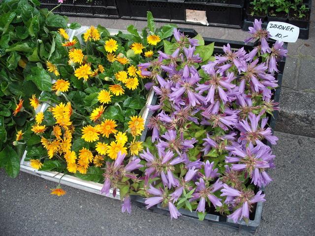 skrzyneczki kwiatowe