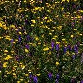 Kolorowa łąka