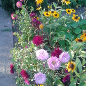 kwiaty mojej babci