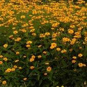 kwiaty na pochmurny dzień