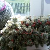 Moje kaktusiki