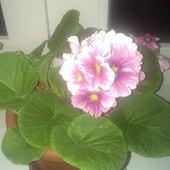 prosze mi podpowiedzieć jaka nazwa tego kwiata :)