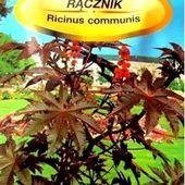 Rącznik -kasztanowiec Rycynus