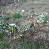 tak było u mnie na wiosne