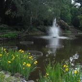 w innej części ogrodu botanicznego