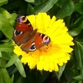Złotego słoneczka Wam życzę :)