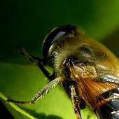 Dobry przykład pszczółki,