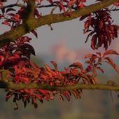 Jesienny wieniec ze śliwkowych gałęzi:)