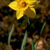 Kwiatek bez skorupy