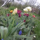 na wiosne u mnie